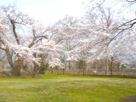 【鹿角市】桜山公園