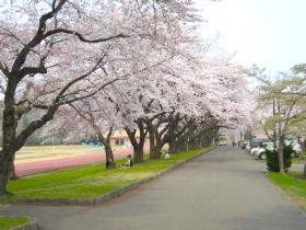 【小坂町】小坂中央公園