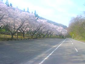 【仙北市】秋田県県民の森