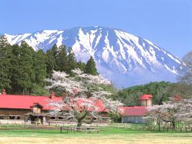 【雫石町】上丸牛舎桜