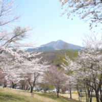 【八幡平市】桜松公園